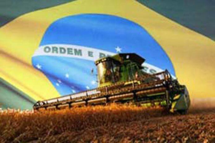 Los cultivos transgénicos ya ocupan más de 40 m illones de hectáreas en Brasil