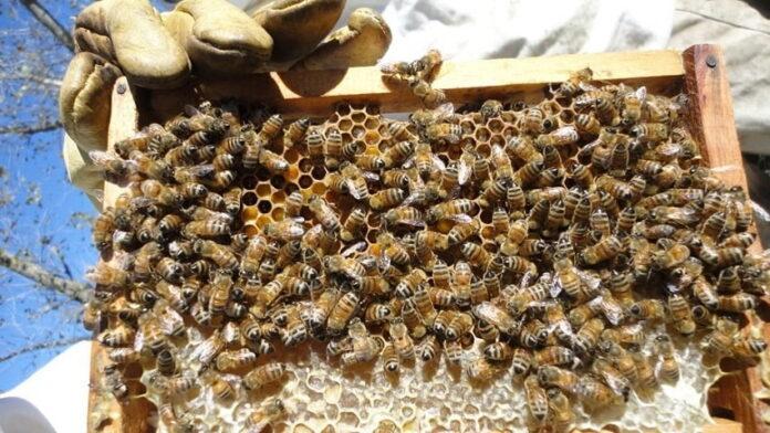 Un nuevo hallazgo puede transformar la producción apícola